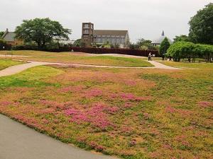 トレジャーガーデン芝桜