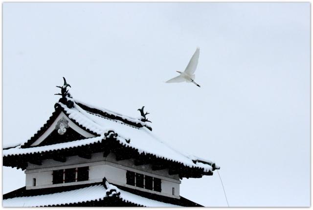 青森県 弘前市 弘前公園 弘前城 天守 観光 写真 ダイサギ 白鷺 野鳥 鳥