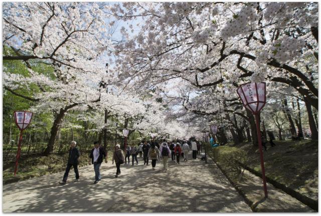 青森県 弘前市 さくら サクラ 桜 弘前さくらまつり 観光 弘前城 弘前公園