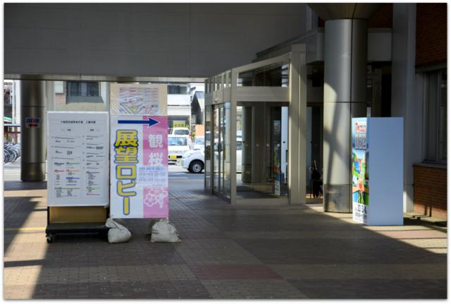 青森県 十和田市 観光 桜 十和田市官庁街通り 駒街道 さくら