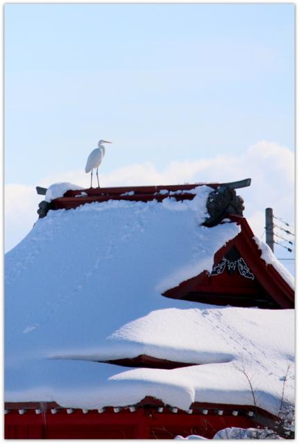 青森県 平川市 猿賀神社 猿賀公園 野鳥 白鷺 ダイサギ 写真
