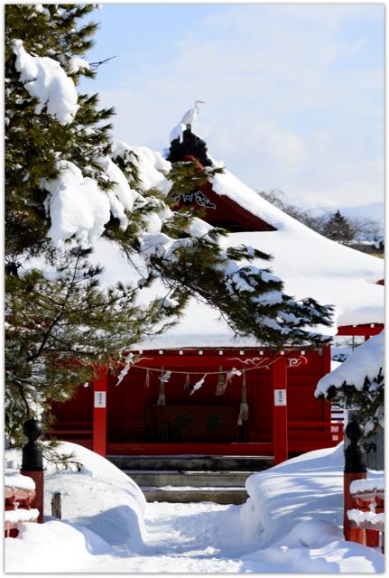 青森県 平川市 ダイサギ 白鷺 野鳥 鳥 写真 猿賀神社 猿賀公園