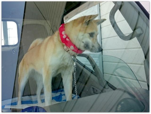 犬の写真 今日のわんこ