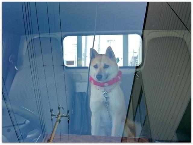 今日のわんこ 犬の写真
