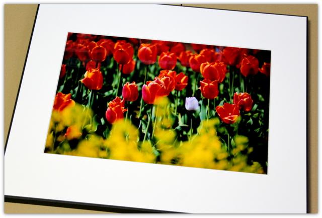チューリップ 写真 撮影 クリスタルプリント 額装 写真展