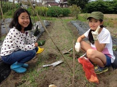 s-試験栽培畝の播種