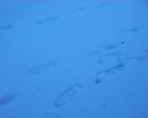 雪の朝 009