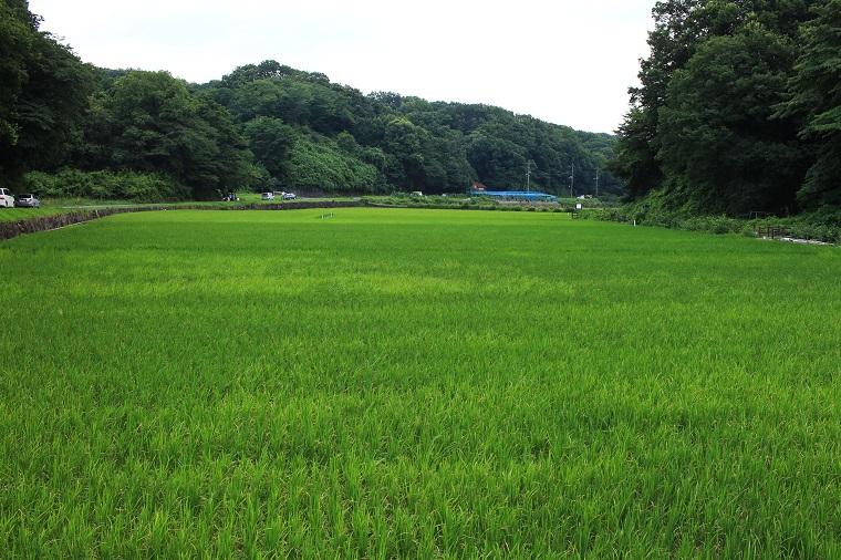 20150721寺谷ふるさと村5a