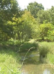 緑と水辺鶴見緑地