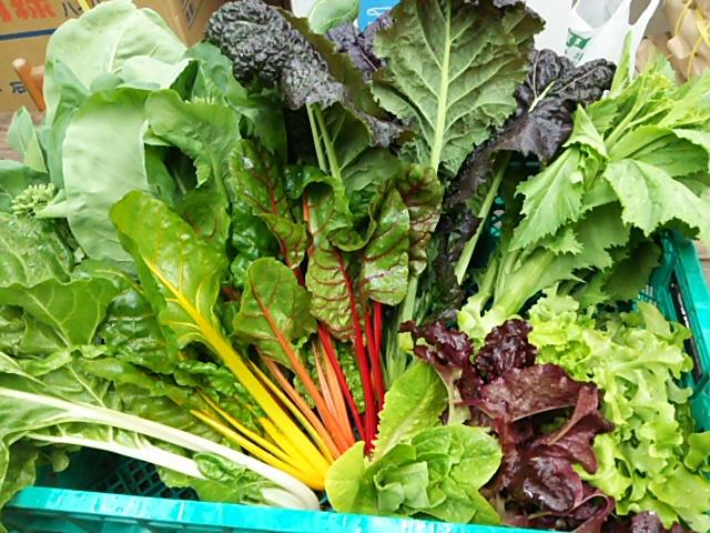 野菜収穫2015*4