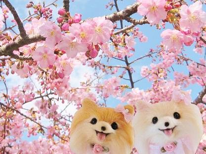 桜 またね
