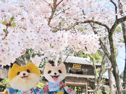 桜の門です