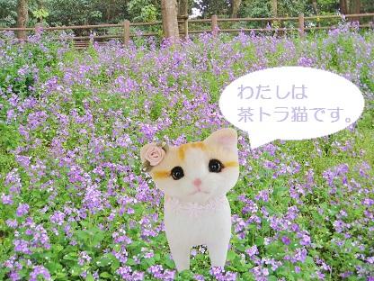 わたしは茶トラ猫です
