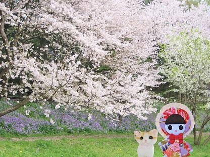ムラサキハナナと桜