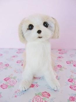 羊毛チャーミーちゃんです
