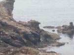 鳶のくちばしに見える岩