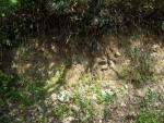 花崗岩地帯