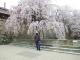 上田城址公園とジイ