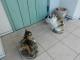 おやつを待つ猫たち