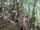 木洩れ日の中の登山