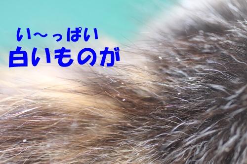 IMG_0621.jpg