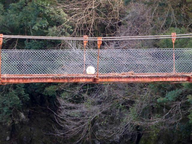 菖蒲野の吊橋9