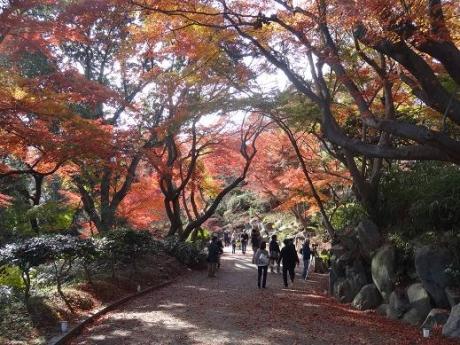 2014年11月30日須磨離宮公園の紅葉②