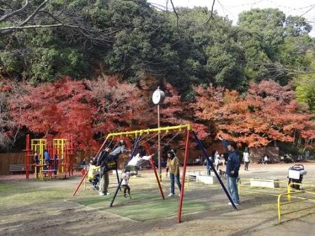 2014年11月30日須磨離宮公園の紅葉③
