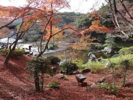 2014年11月30日須磨離宮公園の紅葉④
