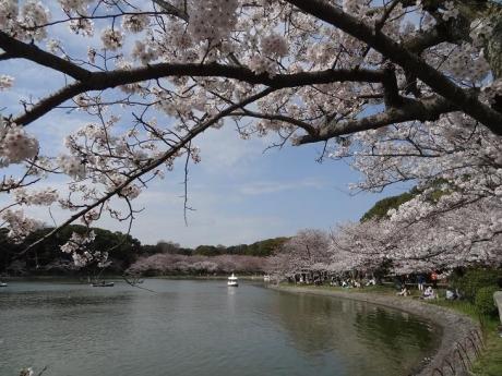 2015年4月2日明石城公園①
