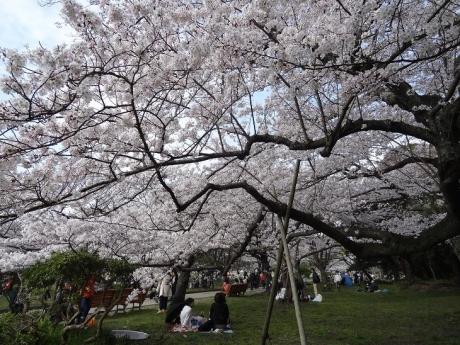 2015年4月2日明石城公園③