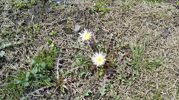 春 (8)