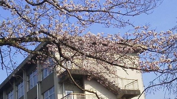 春 (10)