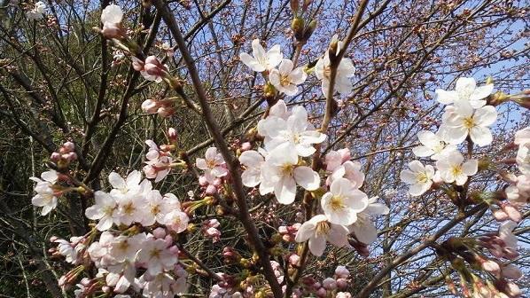 春 (11)