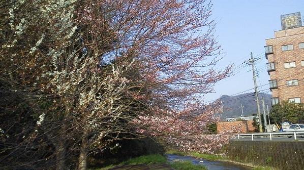 春 (12)