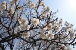 [2015-03-30]蘭亭F