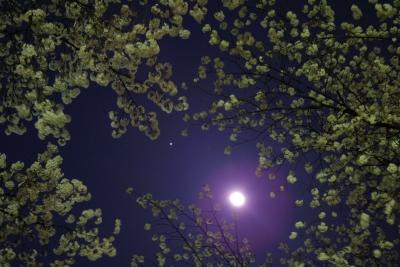 moon-jupiter-2014-03-30-1902.jpg