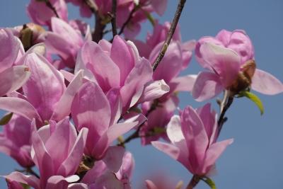 pink-2014-03-28-1301.jpg