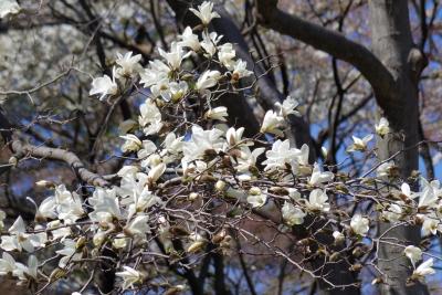 white-2014-03-25-1236.jpg