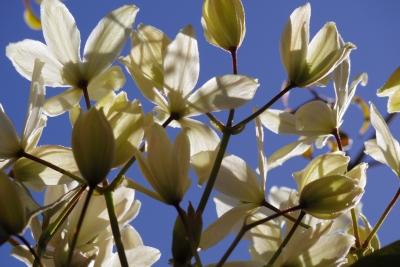 white-2014-03-27-1345.jpg
