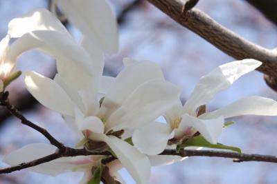white-2014-03-28-1253.jpg