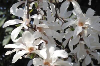 white-2014-03-28-1254.jpg