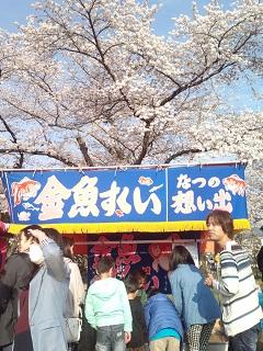 桜・金魚すくい