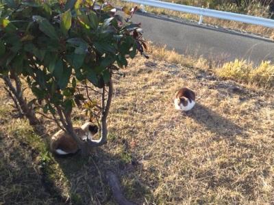 サービスエリアの猫たち②