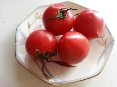 フルーツトマト②