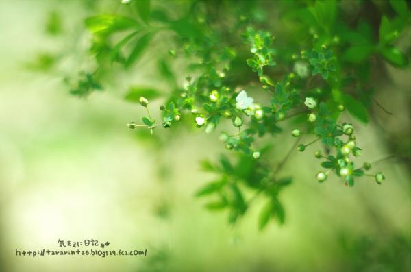 blog438.jpg