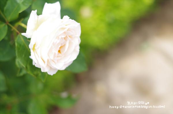 blog473.jpg