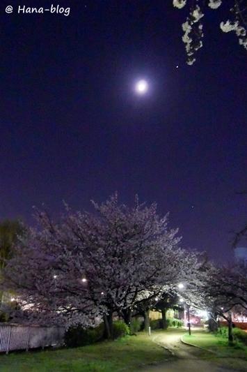 夜桜 094