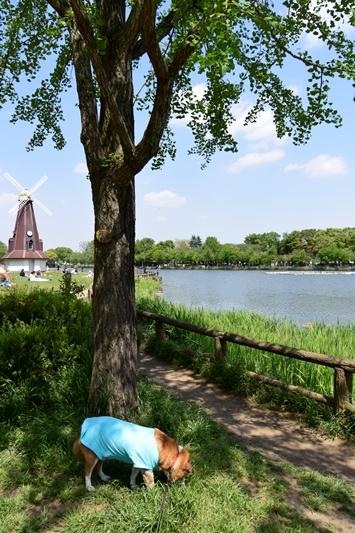 浮間公園 186