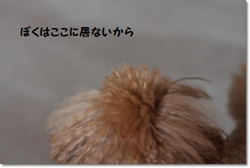 IMG_8222.jpg